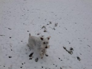 Dog walking in snow